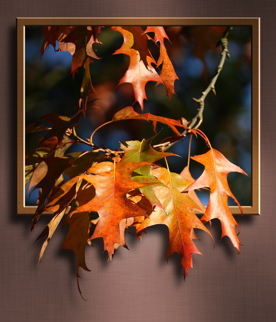 maple-leaves-252097_1280